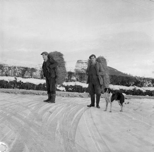 Men at Frongoch, Bala, carrying hay for sheep on their backs during the hard winter of 1963